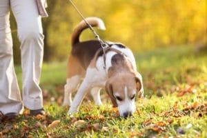 dog-walking-vancouver
