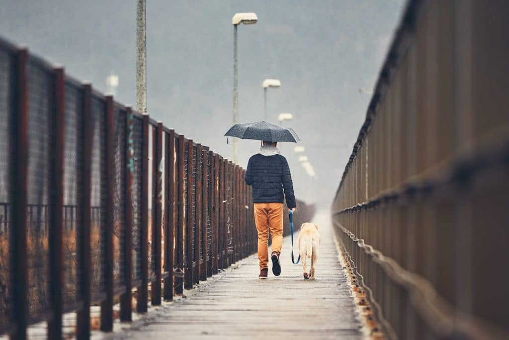 vancouver-man-with-dog-is-walking-to-keep-new-years-resolution