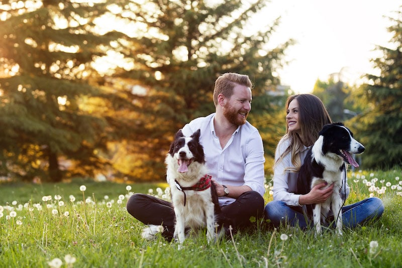 happy-dogs-and-family
